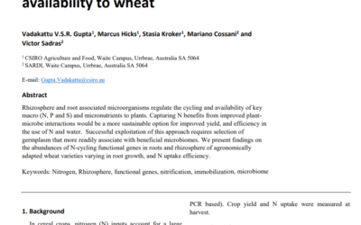 Rhizosphere functional microbiomes drive N availability to wheat